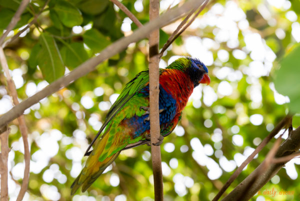 photo photographe adailydream zoo perroquet couleurs animaux